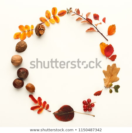 a bunch of dry autumn leaves of trees isolated on white background vector cartoon close up illustra stock photo © lady-luck