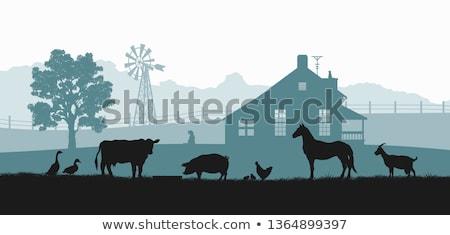 paarden · vereenvoudigd · schets · twee · paard · vector - stockfoto © colematt