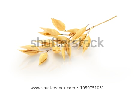yellow spikes of oats stock photo © inaquim