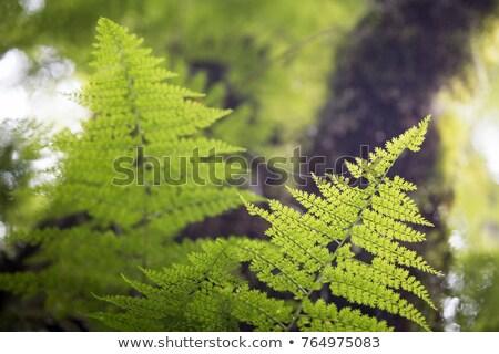 Pajęczyna rano tropikalnych lasu widoku zielone Zdjęcia stock © boggy