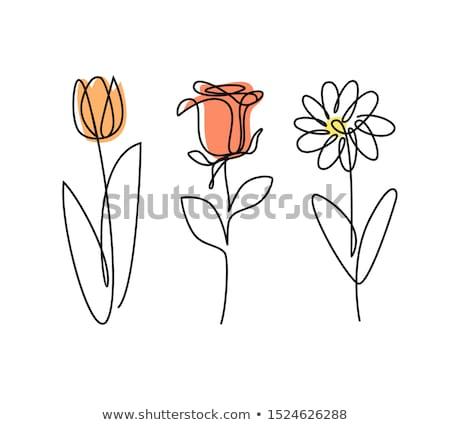 Três vetor flor branco eps folha Foto stock © jara3000