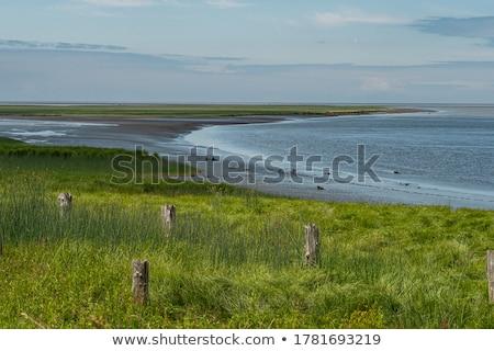 Couple stood by coast Stock photo © photography33