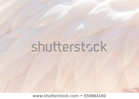 Flamingo rosa fundo Foto stock © ca2hill