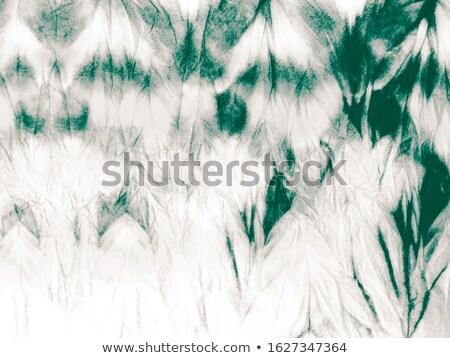 tender green Stock photo © mobi68