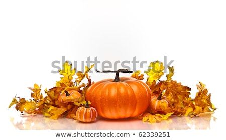 halloween pumpkin with leafs and reflection stock photo © wad