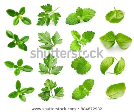 Set from green spice Stock photo © Masha