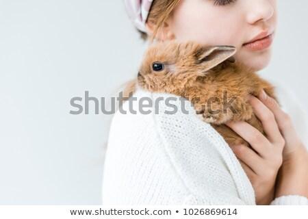 küçük · tavşan · atış · beyaz · bebek · dev - stok fotoğraf © kawing921