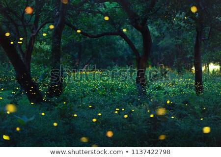 Kép kék égbolt fű fény terv Stock fotó © magann