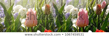 Nawadnianie kwiat ogród kwiat wody trawy Zdjęcia stock © bdspn