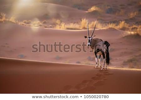 Namibya · çöl · Afrika · hayvan · çevre · safari - stok fotoğraf © imagex