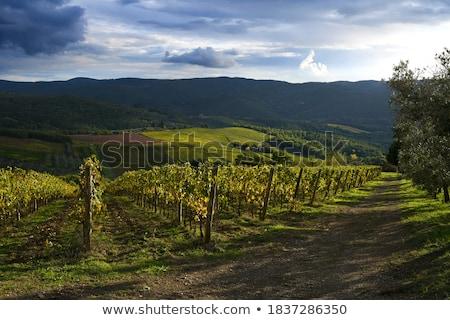 panorâmico · ver · toscana · paisagem - foto stock © hofmeester