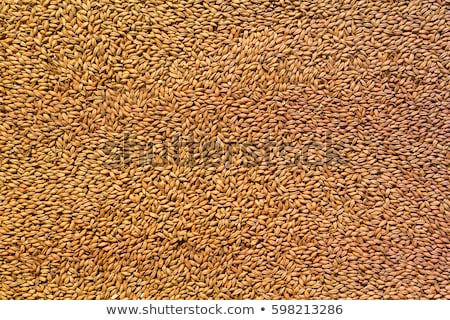 malt as background stock photo © inxti