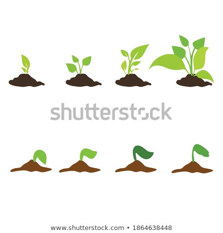 Stock photo: Growing plant step