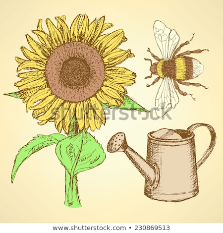 Sketch sunflower, bee and watering can Stock photo © kali