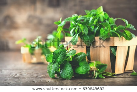 Close up of a green mint plant Stock photo © Julietphotography