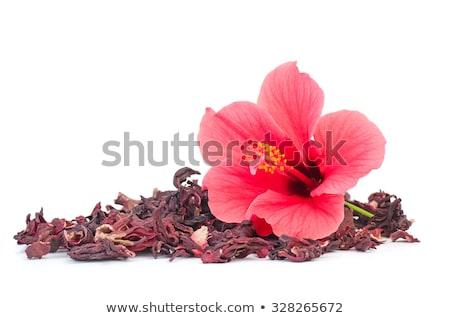 красный · гибискуса · цветок · изолированный · белый · любви - Сток-фото © klinker