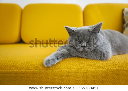 cute cats sleeping on a sofa stock photo © meinzahn