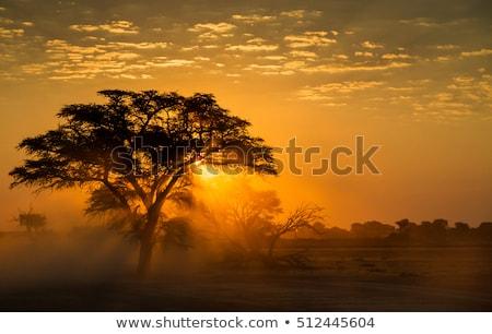 afrikaanse · landschap · Botswana · dramatisch · bomen · regen - stockfoto © romitasromala