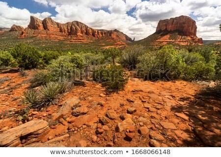 Arizona Desert Landscape Red Rocks Cactus Arid Landscape Stock photo © cboswell