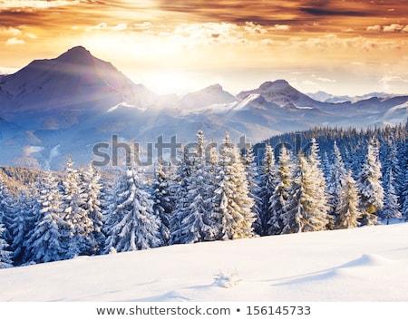 colagem · inverno · paisagem · pôr · do · sol · lago · céu - foto stock © alisluch