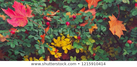 menina · rosa · outono · parque · belo · jovem - foto stock © Mikko