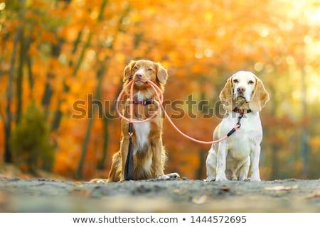 小さな · 古い · 秋 · 草原 · 森林 · 自然 - ストックフォト © dash
