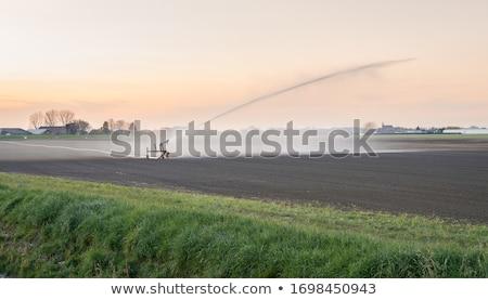 сельского хозяйства Голландии картофеля области дома Сток-фото © ivonnewierink