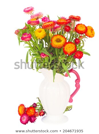 bouquet of everlasting flowers stock photo © neirfy