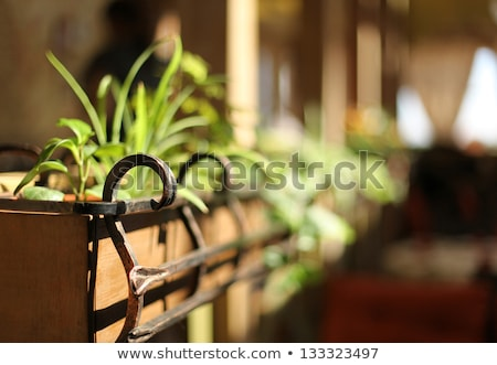Forge iron in green leaves Stock photo © simply