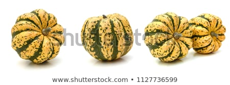 Single Acorn Squash on White Background Stock photo © ozgur