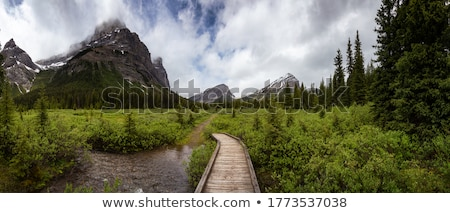 Rocky Hiking Trail in the Mountains Stock photo © Kayco