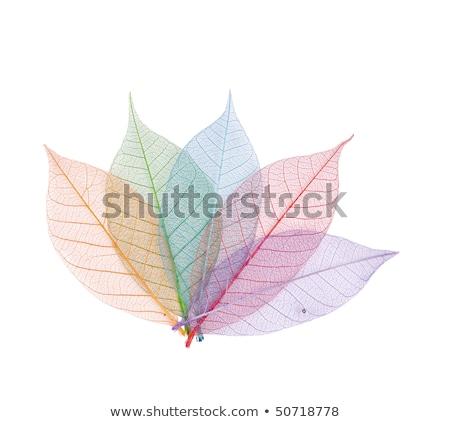Gerçek yaprak detay damar renkler Stok fotoğraf © rufous