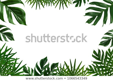 Tropical projeto colorido folhas de palmeira plantas branco Foto stock © BlueLela