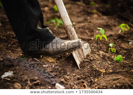 Foot on shovel Stock photo © IS2