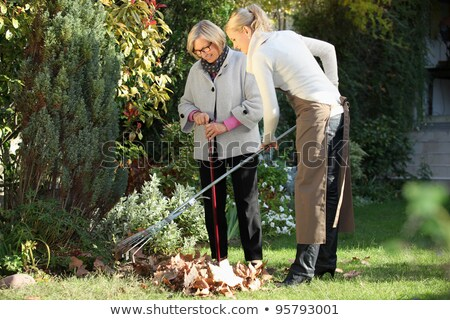 senior woman with lawn rake working at garden stock photo © dolgachov