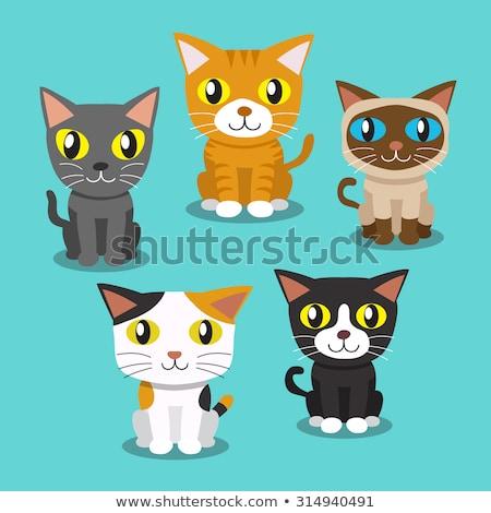 Gatos grupo desenho animado ilustração gatinhos animal Foto stock © izakowski