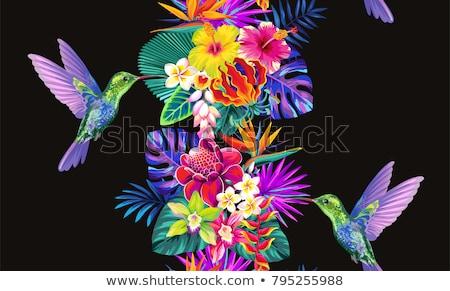 Madár édenkert virág fekete illusztráció természet Stock fotó © colematt