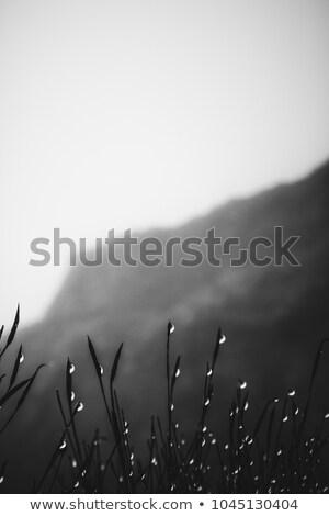 Reggel köd hegyek Grúzia ősz tájkép Stock fotó © Kotenko