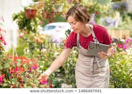 Fiatal női kertész tabletta görbület virágágy Stock fotó © pressmaster