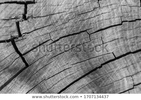 Tree rings background, cut tree trunk, wooden texture, lumber black and white concept. Vector graphi Stock photo © kyryloff