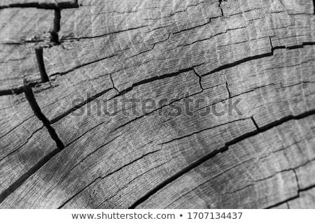 Drzewo pierścienie cięcia tekstury Zdjęcia stock © kyryloff