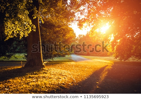Sunny day in mystic forest Stock photo © dashapetrenko