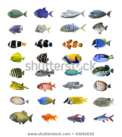 Collection of tropical fish Stock photo © ShustrikS