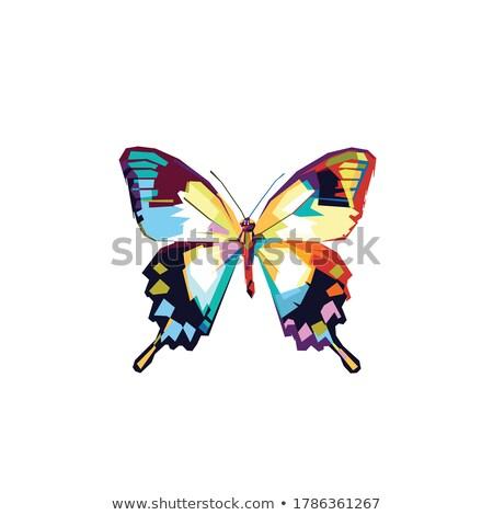 Stockfoto: Abstract · kleurrijk · vleugels · witte · achtergrond · vogels