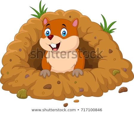 préri · kutya · természetes · élőhely · gyűlés · állat - stock fotó © bobkeenan