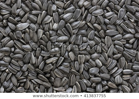 sunflower seeds texture background stock photo © scornejor