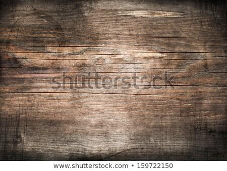 Vecchio asciugare legno coperto neve foresta Foto d'archivio © Aliftin