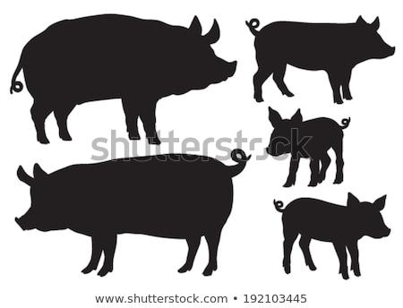 Porcs silhouettes alimentaire animaux porc Photo stock © Kaludov