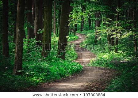 пути лесу дороги лес старые каменной стеной Сток-фото © photosil