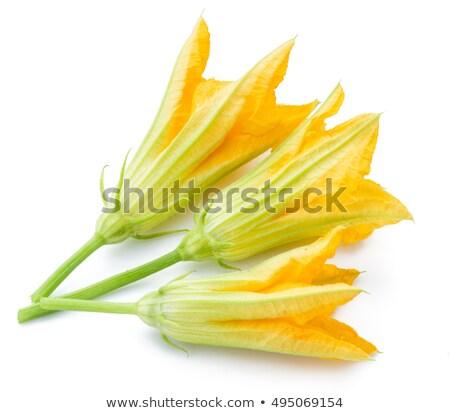 цветы · продовольствие · лист · фон · лет - Сток-фото © oksix